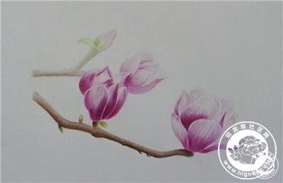 手绘是一种信仰 -- 彩铅花卉习作