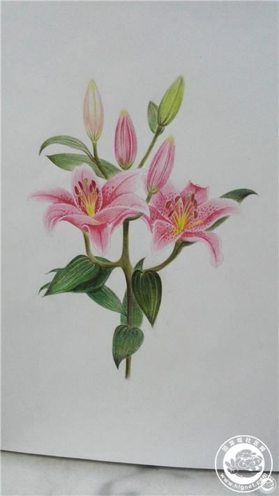 手绘是一种信仰 -- 彩铅花卉习作 by rebliu