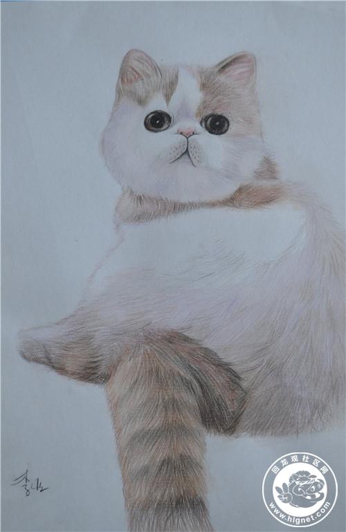 儿童彩铅画猫步骤