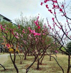 龙禧二小公园花开的正艳,有过来玩的不