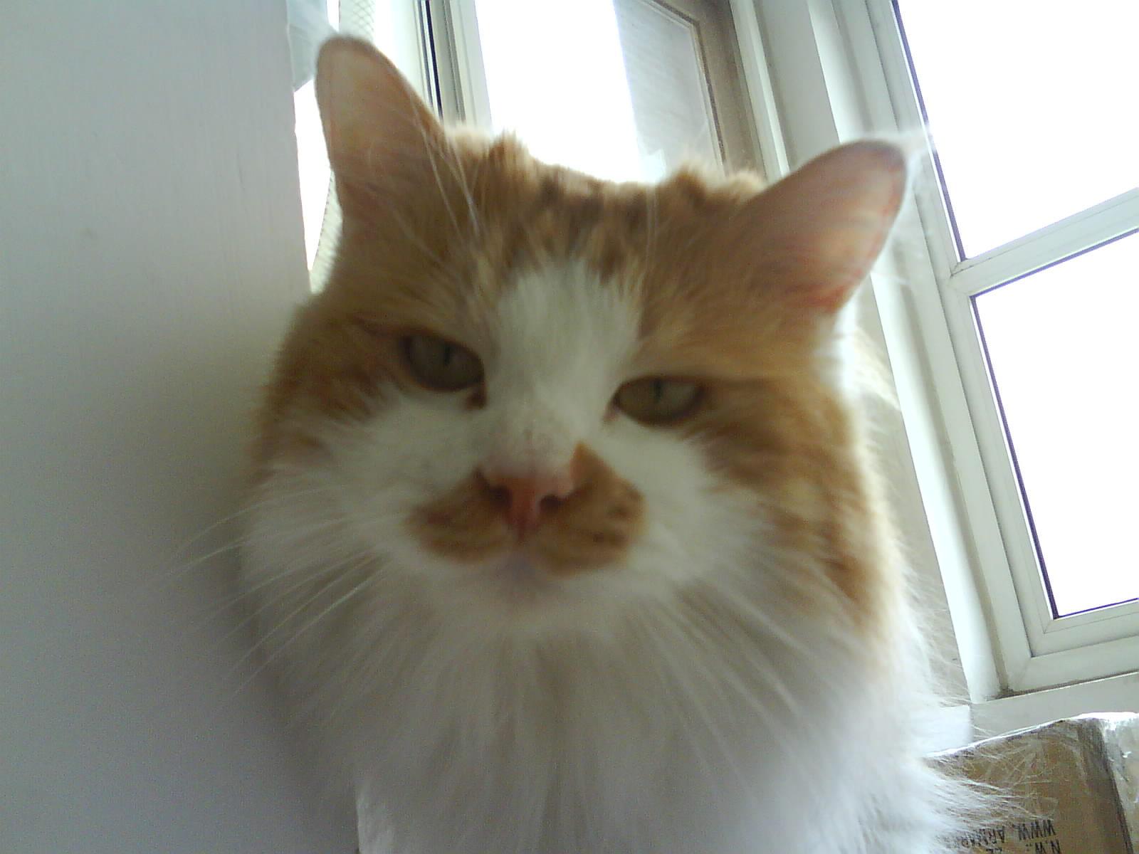 营养膏,宠物洗液,宠物净耳液,宠物指甲剪,剩余的猫粮猫砂,猫咪有约