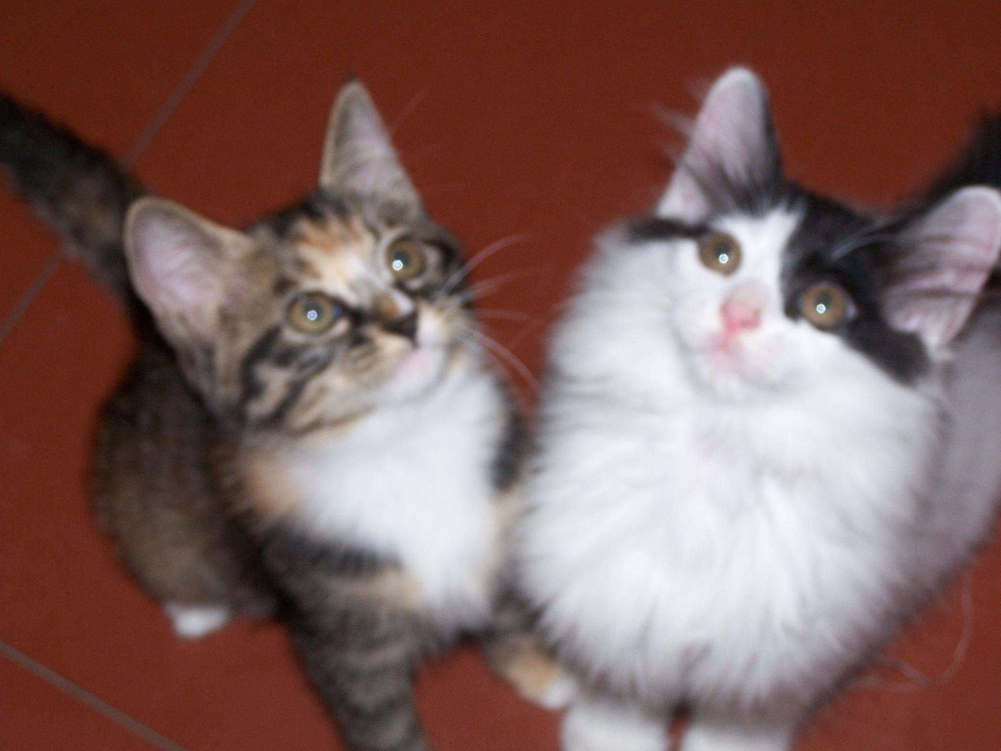 可爱猫咪照片来了!
