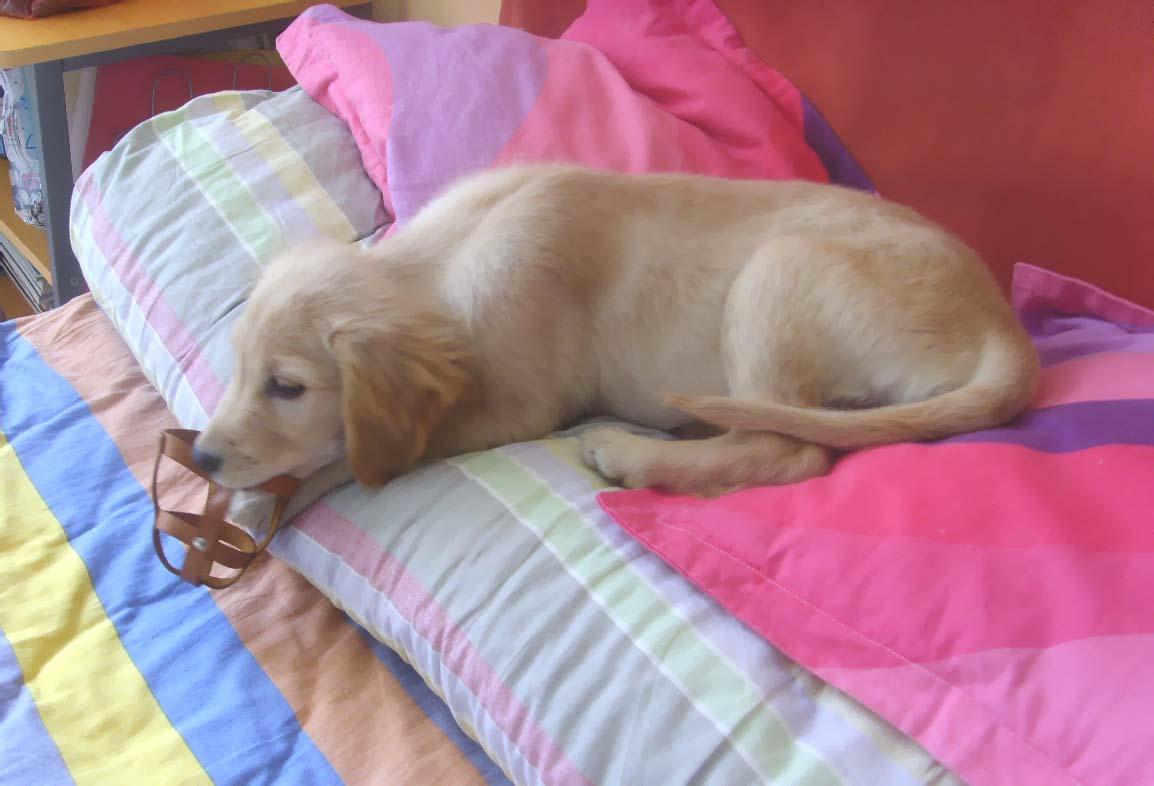坐也卧行也卧立也卧卧也卧是哪个动物