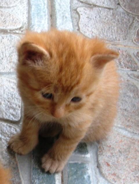 领养刚出生一个多月的小猫咪