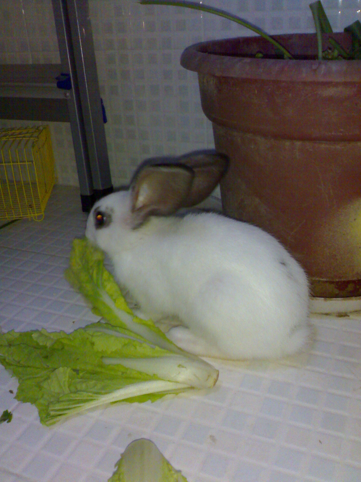 壁纸 动物 兔子 1200_1600 竖版 竖屏 手机