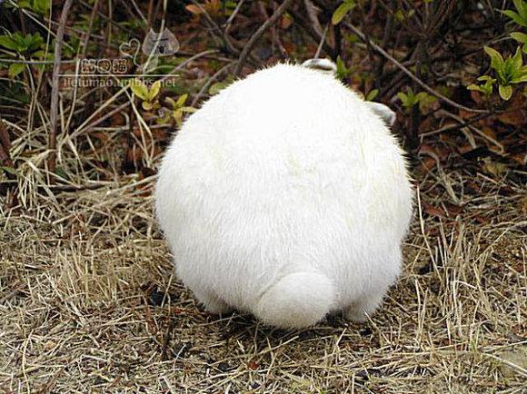 长尾巴的兔子_兔子尾巴长不了_回龙观社区网