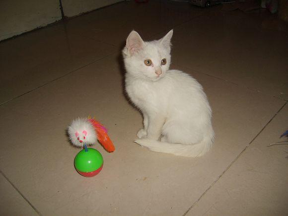 新捡的小白猫上片片了