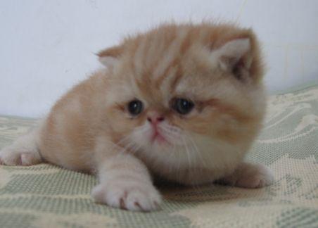 可爱的小老虎qq头像