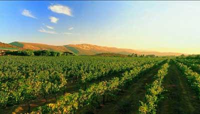 南非葡萄酒产区 罗伯森产区简介