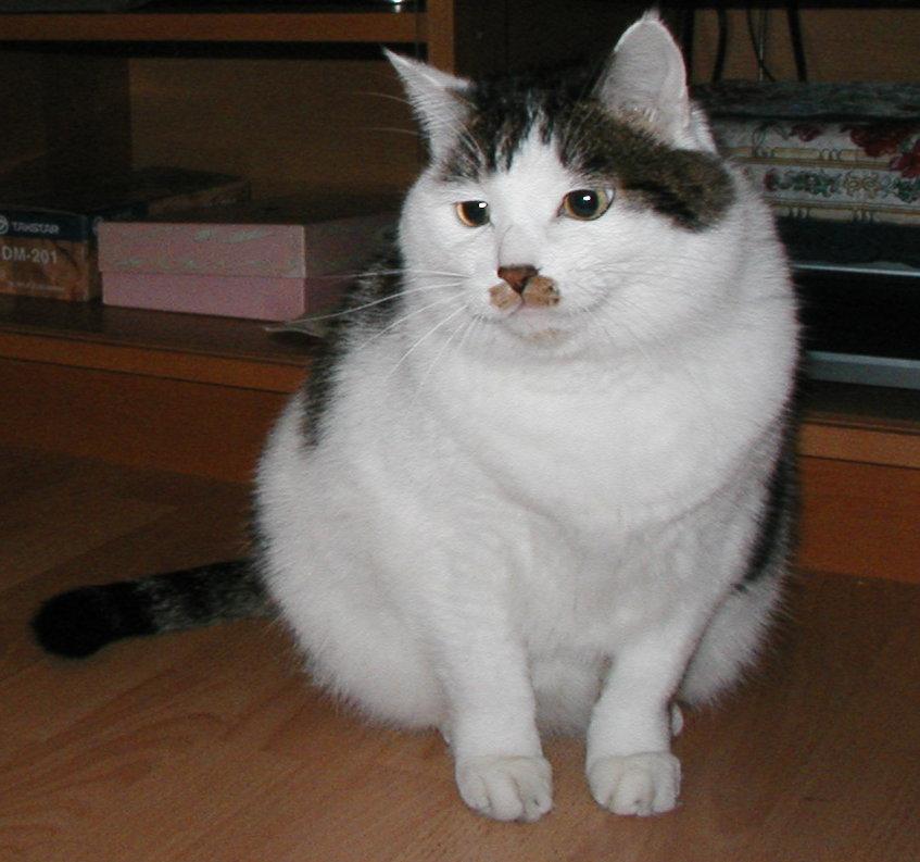 好久没回这里看看了,一回来就来讨东西。我家的猫猫上厕所不用猫沙,从小养的坏毛病,要用报纸,可是最近我们夫妻都自由了,就没有报纸可以拿回来了,所以想问问观里的ZZ们,谁有不用的报纸能送我点,花钱买点也可以..(空)-alanxiao