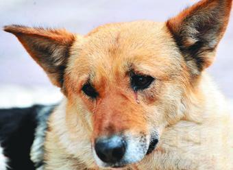 狗狗流着泪寻找回家路 - 雨星 - 雨星