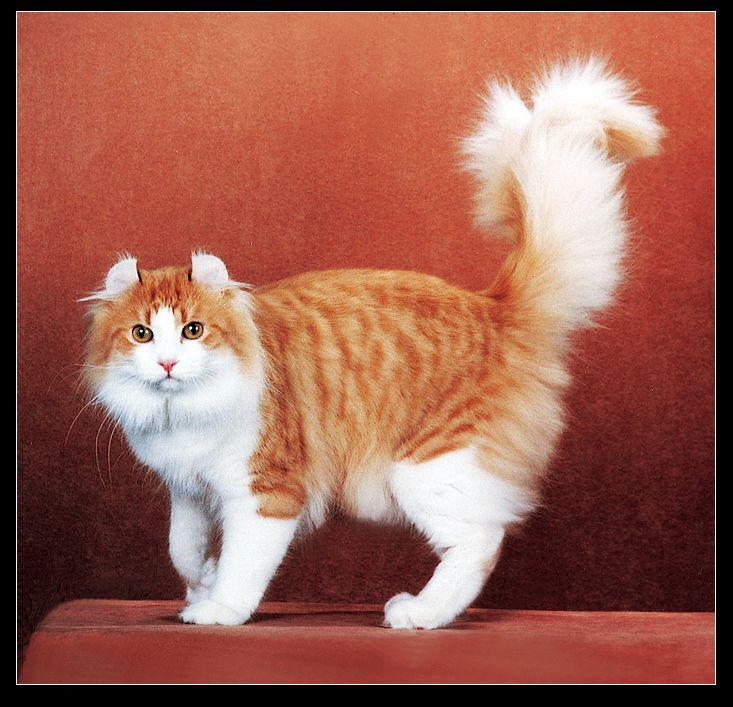 壁纸 动物 猫 猫咪 小猫 桌面 733_707