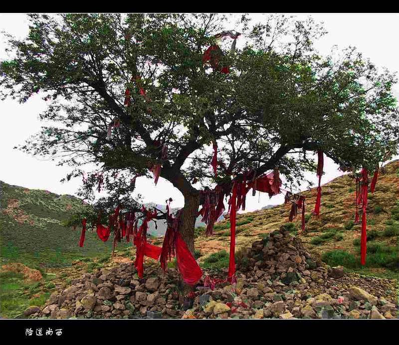 一块块石头昭示着朝圣者的虔诚,一条条经幡传递着灵魂的低语 尚西是蒙古语神树的意思,蒙古族人民有祭尚西的习俗。通常是在一棵孤独的神树下,用五颜六色的花布条把树枝装饰得特别艳丽。人们怀着崇敬的心情将此树供奉为神树。每当牧民途经这里,都要求助神树,希望来年风调雨顺。每年还将在一个特定的日子,男女老少汇聚在神树周围拜祭,并推选几名主祭人手捧哈达、美酒、奶食品,向尚西老人敬献。仪式结束后,便进行蒙古族人民喜闻乐见的传统文体活动。年青的健儿们,有的赛马,有的射箭、摔跤。祭祀大会充满了欢乐的景象。 『声明:以上内容为