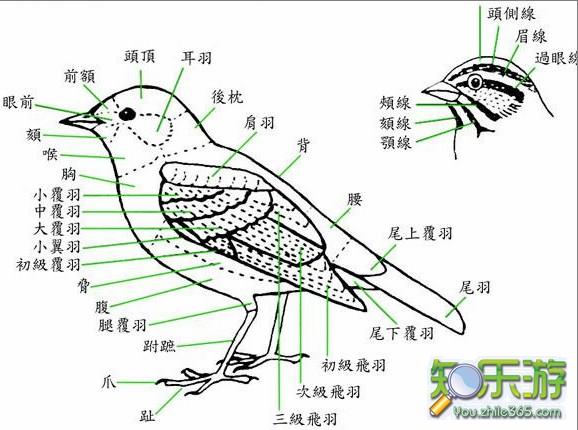 3米的军舰鸟,通常在海岸160公里的海上飞行,是我国一级保护动物.