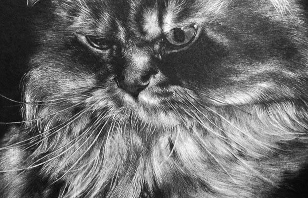 素描猫 简单 可爱