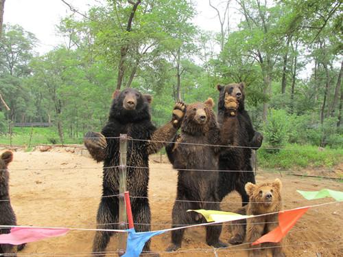 秦皇岛野生动物园与曼谷野生动物园,动物动物都是动物