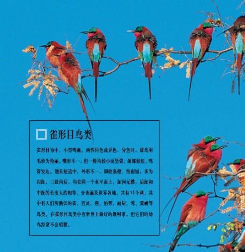 我这里有电子版的动物百科全书关于鸟的,有喜欢的可以