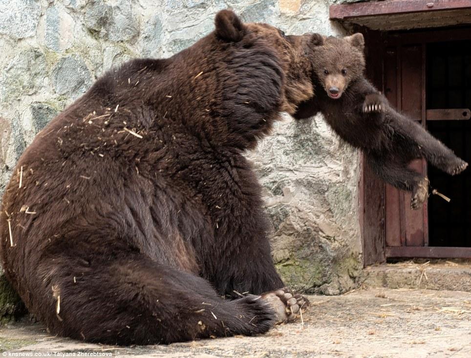 欧美抱熊宝宝图片(3)
