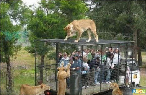 参观野生动物园.