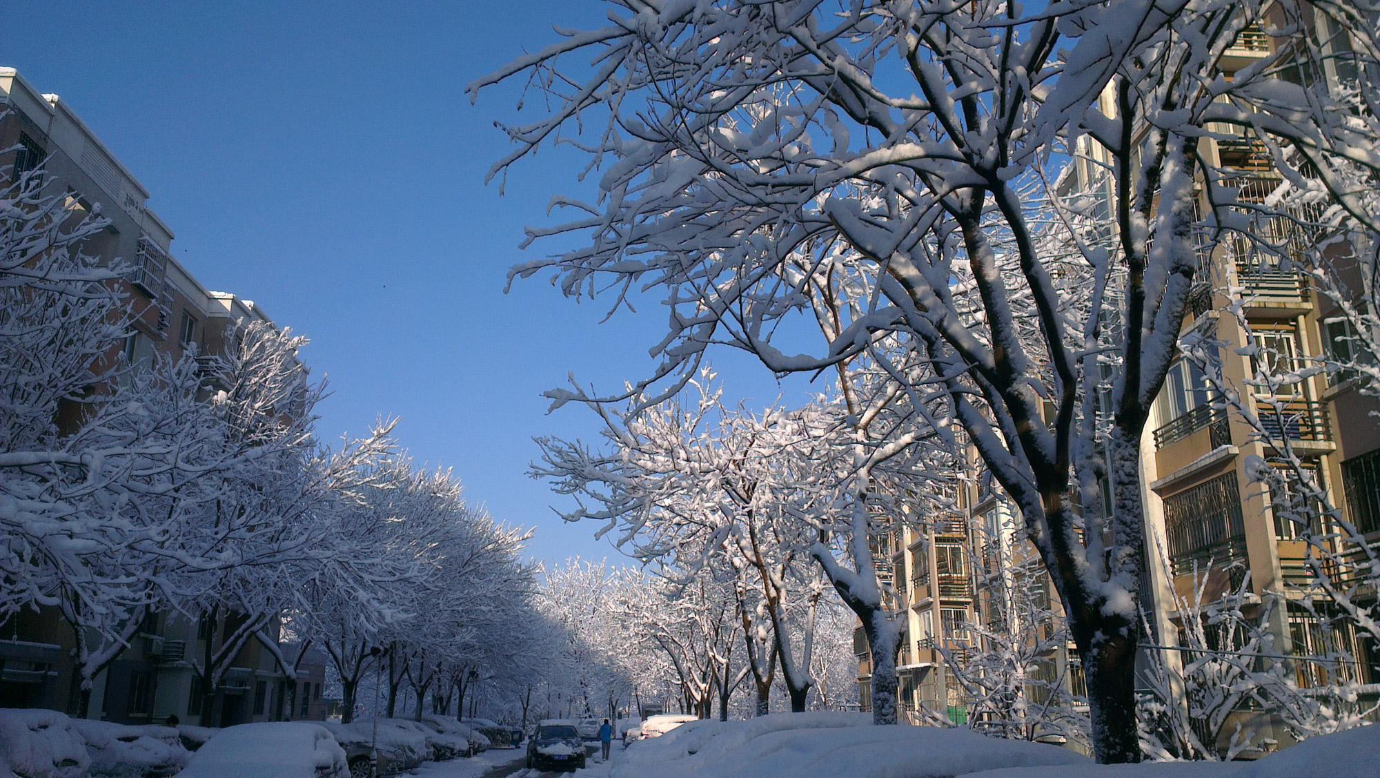 秀几张昨天早晨小区里的雪景