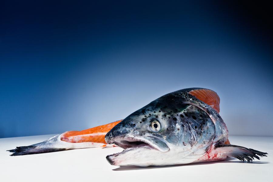 一条恋家的鱼