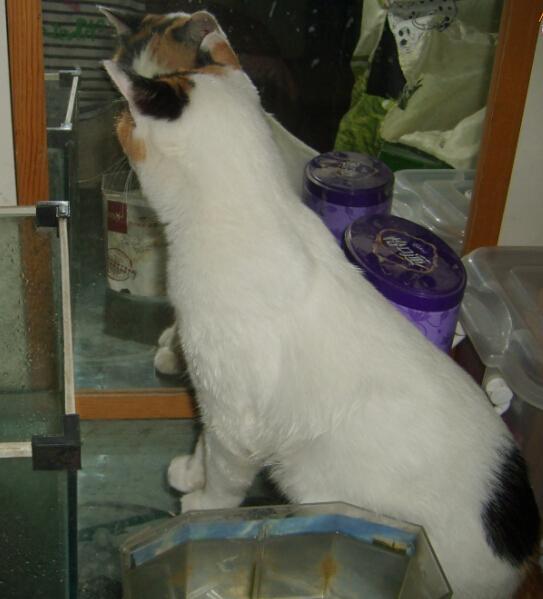 爱照镜子的猫
