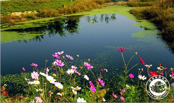 来此休闲散步.春天风大,是放风筝的绝佳选择.在滨河森林公园,寻图片