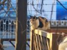 流浪猫的春天