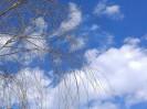 手机抓拍:小区里樱花开柳叶发芽了