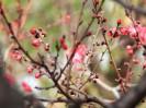 满园春色花正红:拍摄于昌平回龙观公园