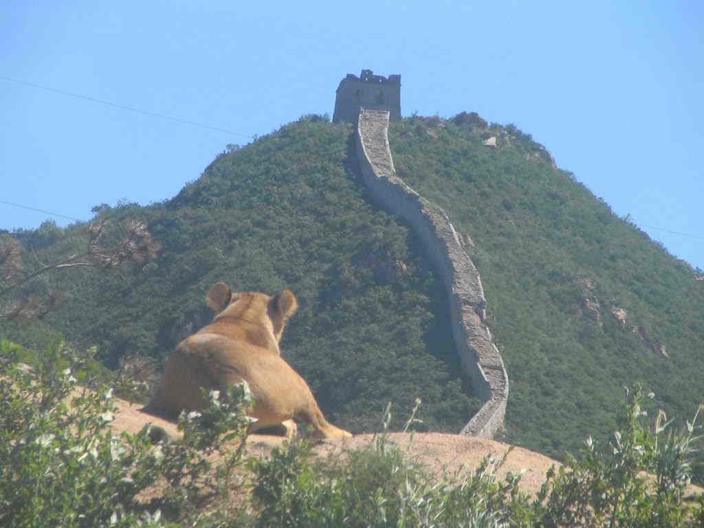 八达岭野生动物世界观马戏赏红叶送地图65
