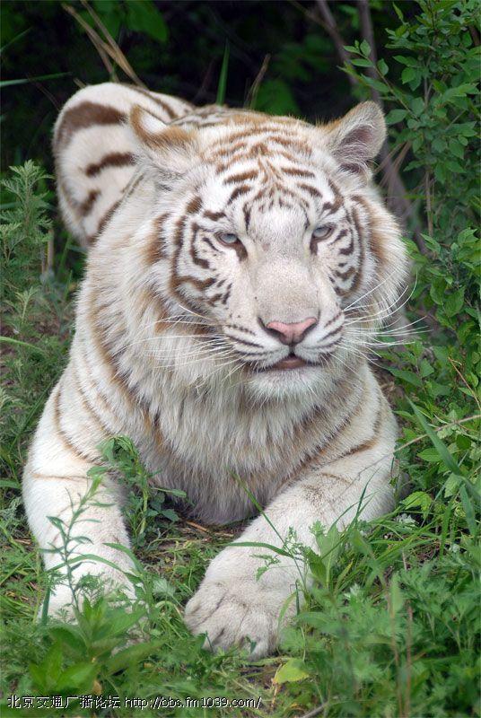 北京八达岭野生动物园门票票价优惠