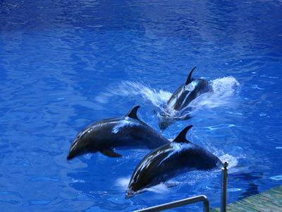 北京动物园海洋馆,太平洋,富国海底世界