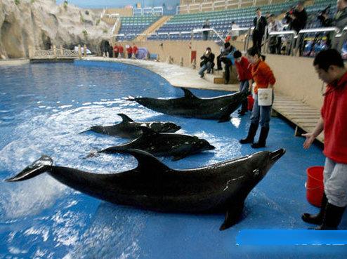 北京动物园海洋馆,太平洋