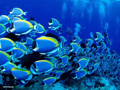 温都水城 水魔方 野生动物园 海底世界