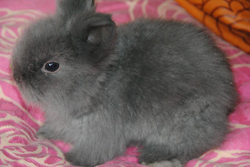 可爱的猫猫兔,道奇兔,培养孩子从小有爱心