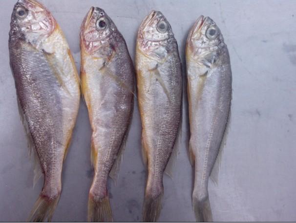 青岛崂山渔民海鲜直运,野生海捕!第三团