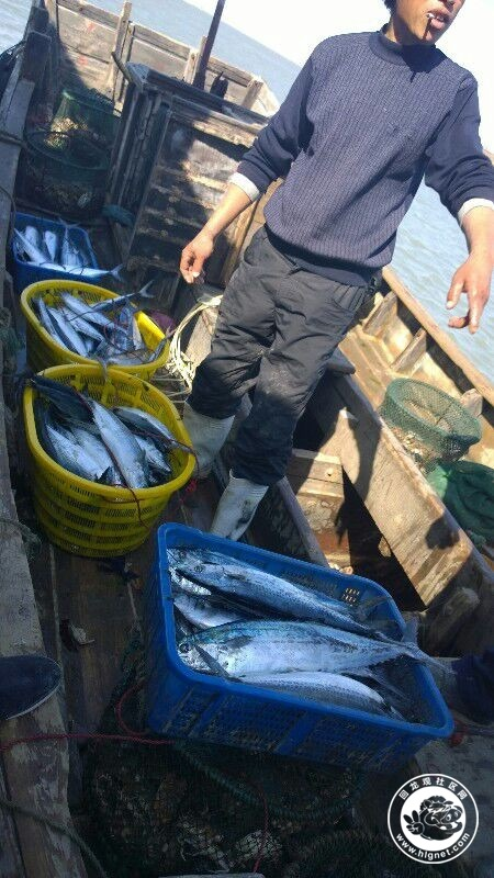 崂山渔民海鲜直运,禁海前最后一团