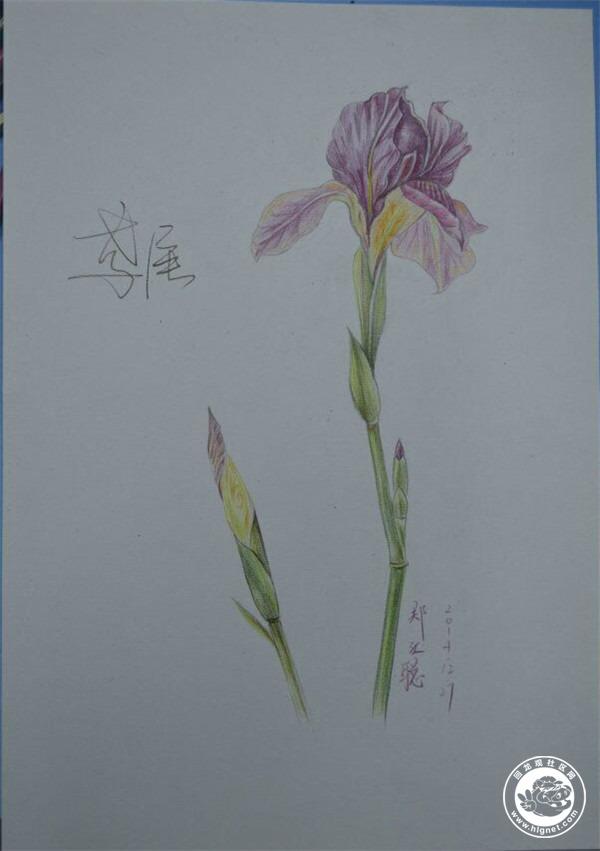 彩铅手绘花风景