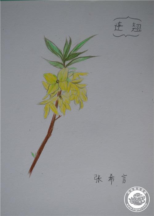成人青少年素描水粉油画彩铅创意美术课程培训