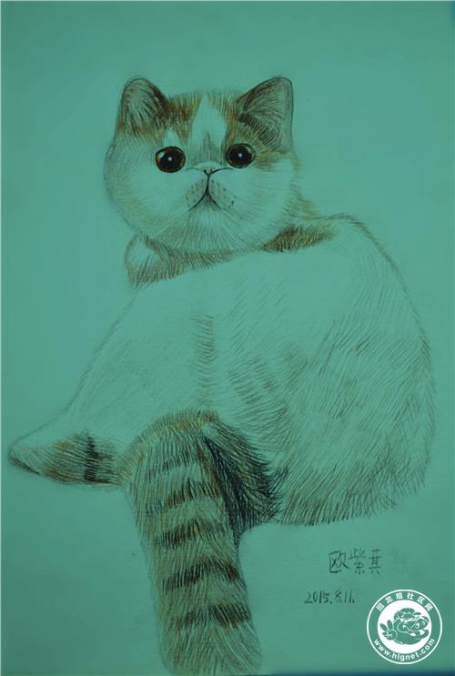 彩铅手绘动物课程