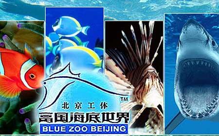 海底动物立体折法