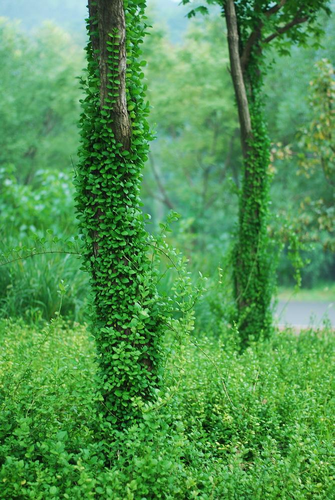 森林公园雨天小景