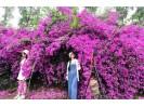 鲜花步道吸引民众拍照打卡
