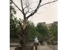大风天,观里一小区的树枝被刮断,挡住出行道路…